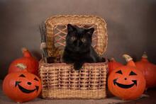 Black Cat As A Halloween Symbo...