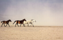 A Plain With Beautiful Horses ...
