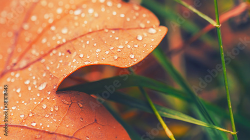 Foto Dry fall leaf texture detail