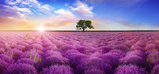 Beautiful lavender field with single tree under amazing sky at sunrise. Banner design