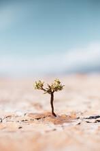 Little Tree In The Desert