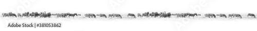 Fototapeta Zebras herd white background isolated, black and white art border, striped animal pattern, african wild nature landscape, monochrome wallpaper, decorative ornament, frame, banner design, trendy print obraz