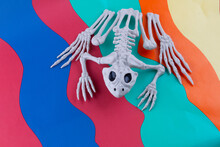 Sinister Toad Skeleton With Bl...
