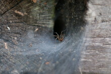 Spider In A Hole On A Web