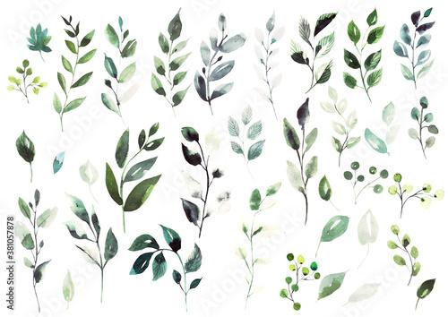 Obraz Watercolor elements  different green leaves. - fototapety do salonu