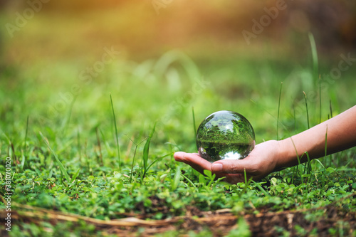 Fototapeta A hand holding crystal glass ball in the grass field for environment concept obraz