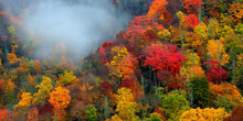 Misty Autumn Forest In Great Smoky Mountains National Park