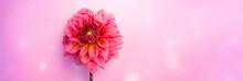 Beautiful Flower Dahlia Summer...