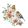 Watercolor card with robin redbreast, cotton, rose, berries and eucalyptus leaves. Hand painted bird and flowers isolated on white background. Floral illustration for design, print or background.