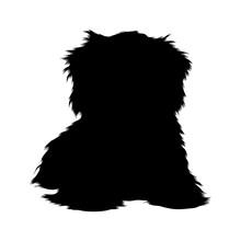 Norfolk Terrier Dog Sitting On...