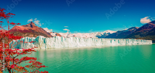 Panoramic view over gigantic full size Perito Moreno glacier in Patagonia with blue sky and turquoise water glacial lagoon, and red lenga trees in Autumn colors, South America, Argentina