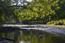 Branche Sur Ruisseau