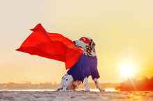 Superhero Dog With Flying Cloa...