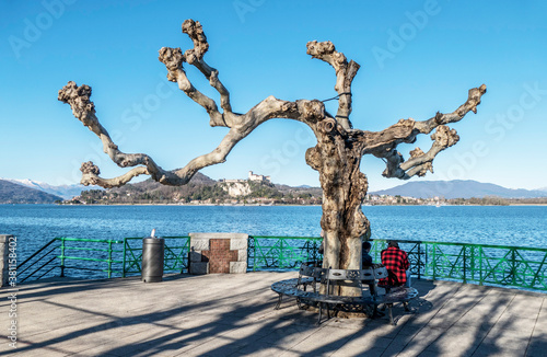 Photo Old tree in the lake front of Arona with the lake and Angera in background