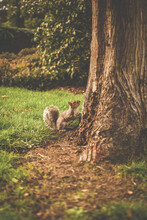Squirrel Climbing Tree On A Nice Sunny Day