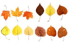Collection Of Beautiful Autumn...