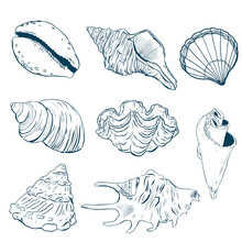 Watercolor Sea Shells Line Art Set. Hand Painted Underwater Element Illustration Isolated On White Background. Aquatic Illustration For Design, Print Or Background.