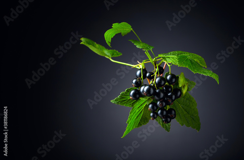 Fotografiet Branch of black currant  with leaves and ripe juicy berries.