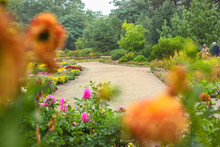 Park Of Blossoming Chrysanthem...