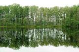 jesienne pejzaże przyrody, roślinność przeciwległego brzegu jeziora i jej lustrzne odbicie w wodzie