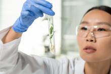 Hand Of Laboratory Worker Look...