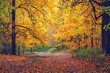 Pathway in the bright autumn forest