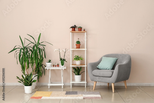 Fototapeta Stylish interior of room with green houseplants obraz