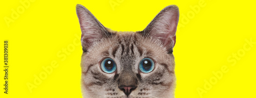 Eager domestic cat looking forward curiously Fotobehang