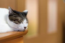 ぐっすり眠る猫ちゃん...