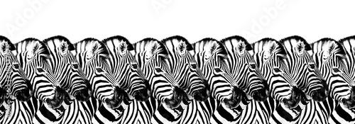 Naklejka premium Striped zebras seamless pattern white background isolated, zebra head art border, animalistic black & white banner design, african animal wallpaper, wild nature frame, repeating ornament, trendy print
