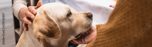 Photo cropped view of senior couple stroking golden retriever at home, panoramic conce