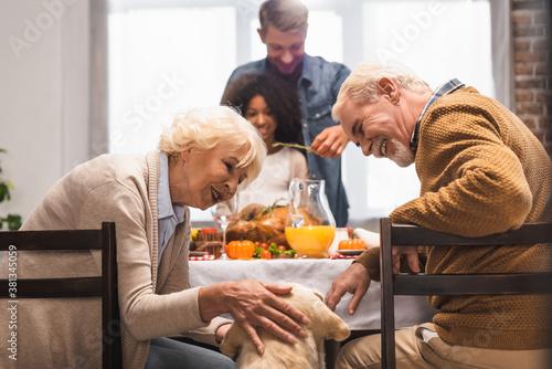 Fototapeta senior woman stroking golden retriever while celebrating thanksgiving day with multicultural family obraz