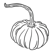 Ripe Pumpkin With A Swirling Long Stem On A White Background. Black And White Vector Hand Drawn Pumpkin Illustration. Isolated Vegetable For Greeting Cards, Print, Coloring.