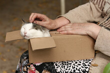 Country Funny Cat In Box On Th...