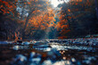 sun rays in autumn forest by the river