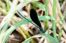 A Beautiful Black And Emerald ...