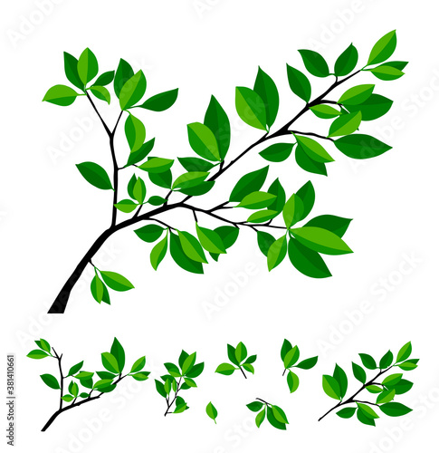 Summer tree branch with fresh green leaves. Vector illustration Fototapet