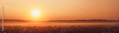 Sunrise and fog over plants autumn landscape panoramic