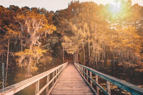 Photo Autumn mood at the Caddo Lake, Texas