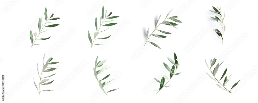 Fototapeta Twigs with fresh green olive leaves on white background, top view