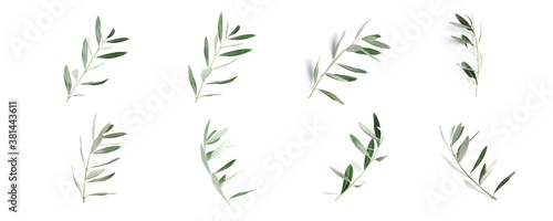 Fototapeta Twigs with fresh green olive leaves on white background, top view obraz
