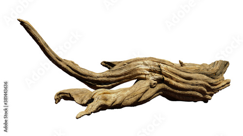 driftwood isolated on white background, aged branch Canvas Print