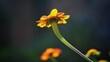 canvas print picture Backlit Flower
