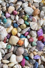 Multicolored Dry Seashells Of Different Species Mixed Together, Vertical Format Macro Image.