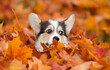 puppy face peeking out of yellow autumn leaves
