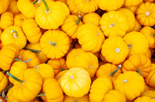 Pile Of Yellow Pumpkins