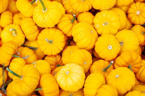 pile of yellow pumpkins Fototapet