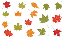 Autumn Leaves Vector Set Illustration Fall Leaves