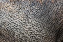 Elephant Wrinkled Skin