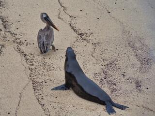 Leon marino de las islas Galapagos en Ecuador